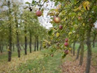 Apple Orchards – On the Farm